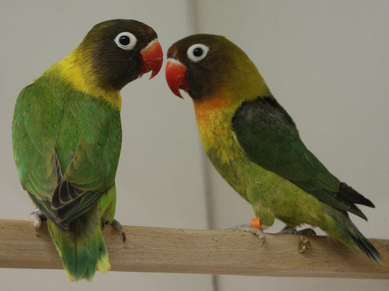Zoohaus ks vögel